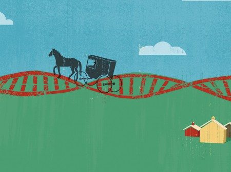 amish dna illo